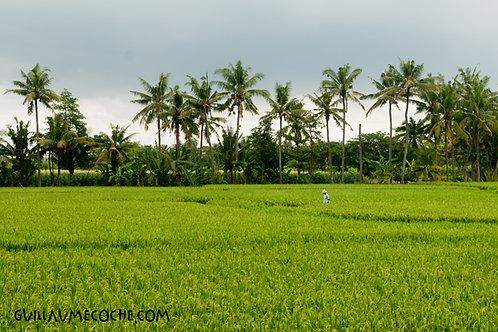 Green walk - Indonésie