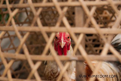 I am Ayam - Indonésie