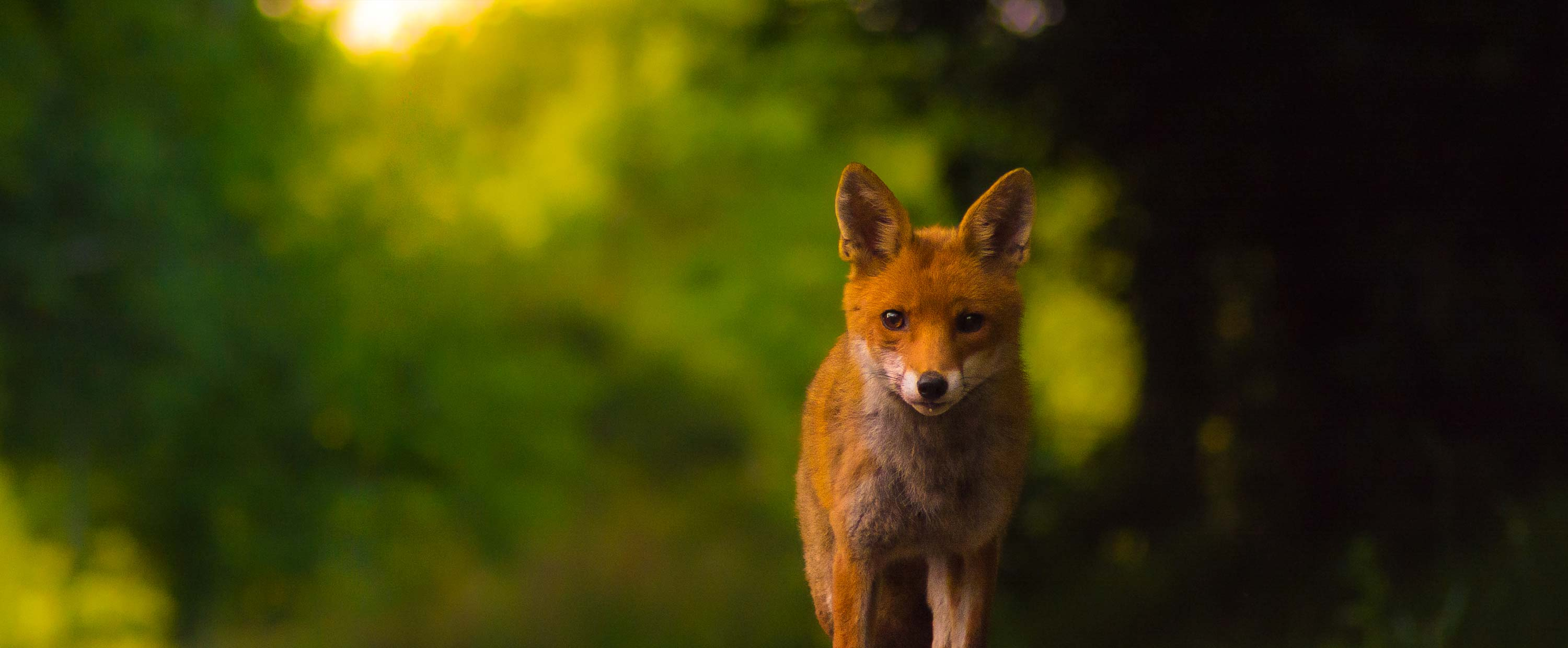 Regard-Renard-by-Guillaume-Coche-Photography.jpg