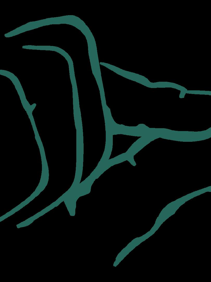 HoSArtboard 4_3x gjennomsiktig bakgrunn