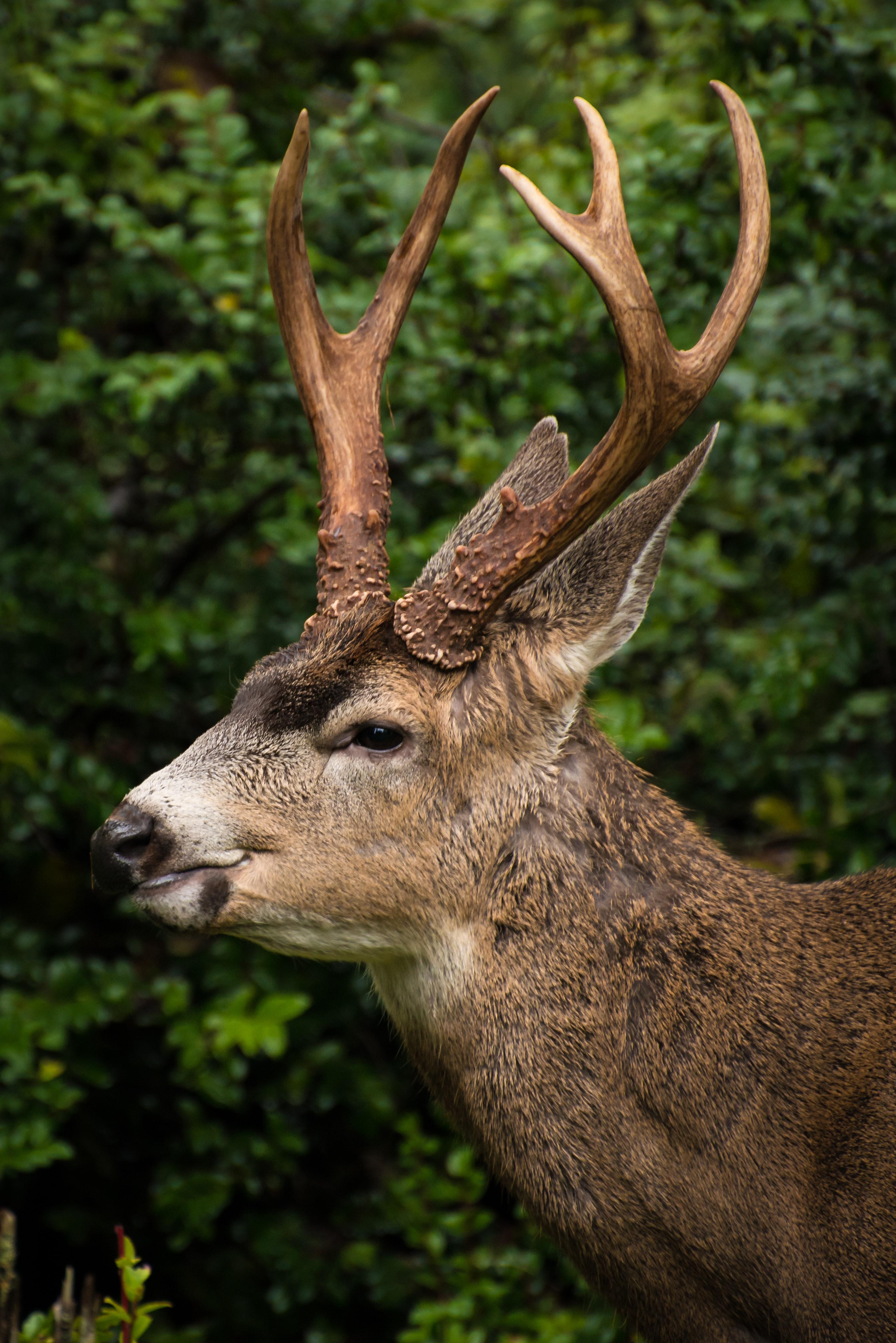 deers-wa