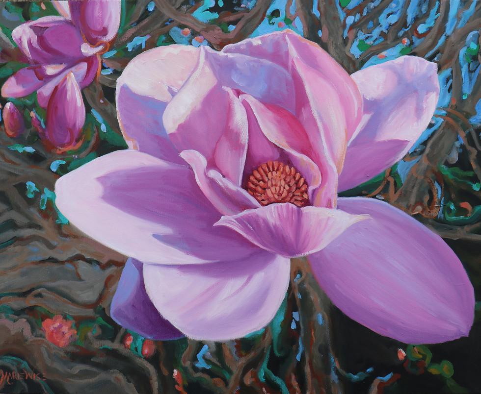 Tulip Magnolia  16x20