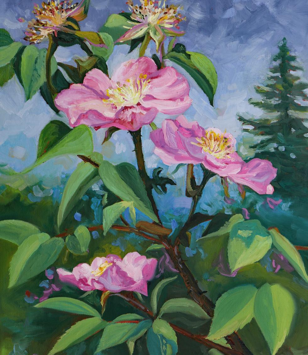 Wild Rose Trio  11x14x0.75