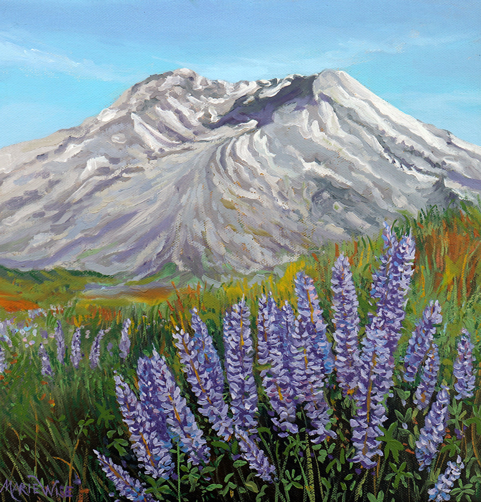 Mount St Helens and Lupines  12x12