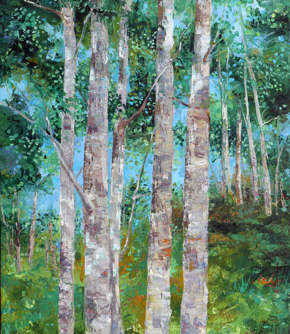 Aspen Trees  14x11x0.25