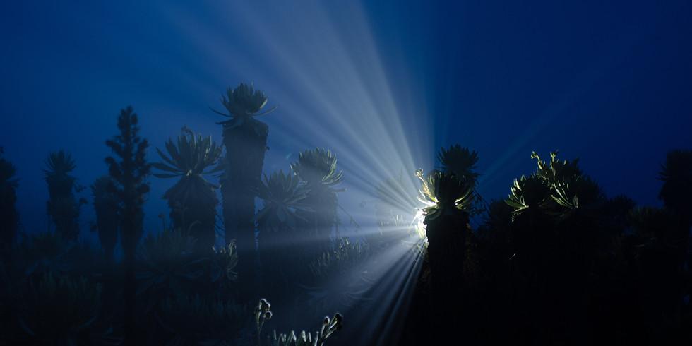 Noche entre frailejones: Páramo de Belmira
