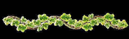 kissclipart-vines-png-clipart-vine-clip-
