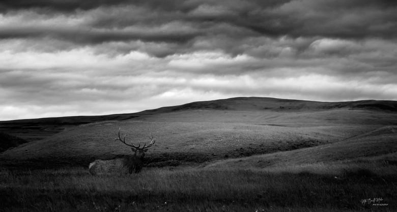 Bull field.jpg