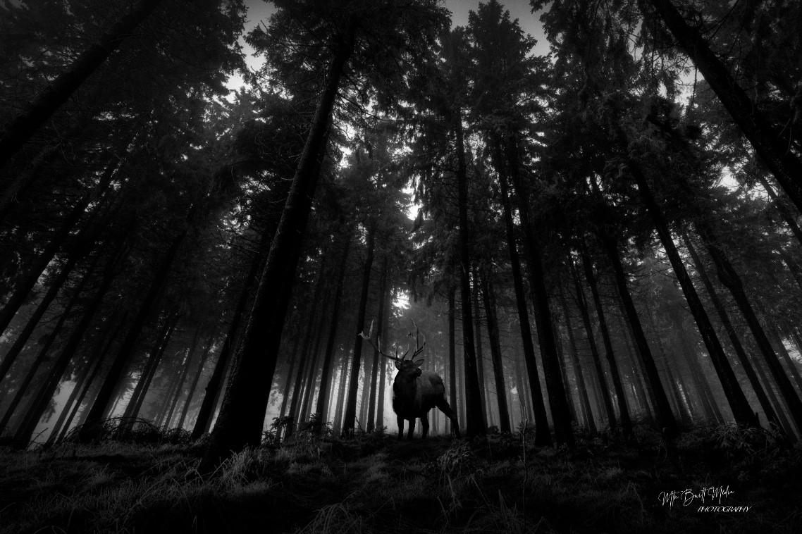 Bull Dark Timber.jpg