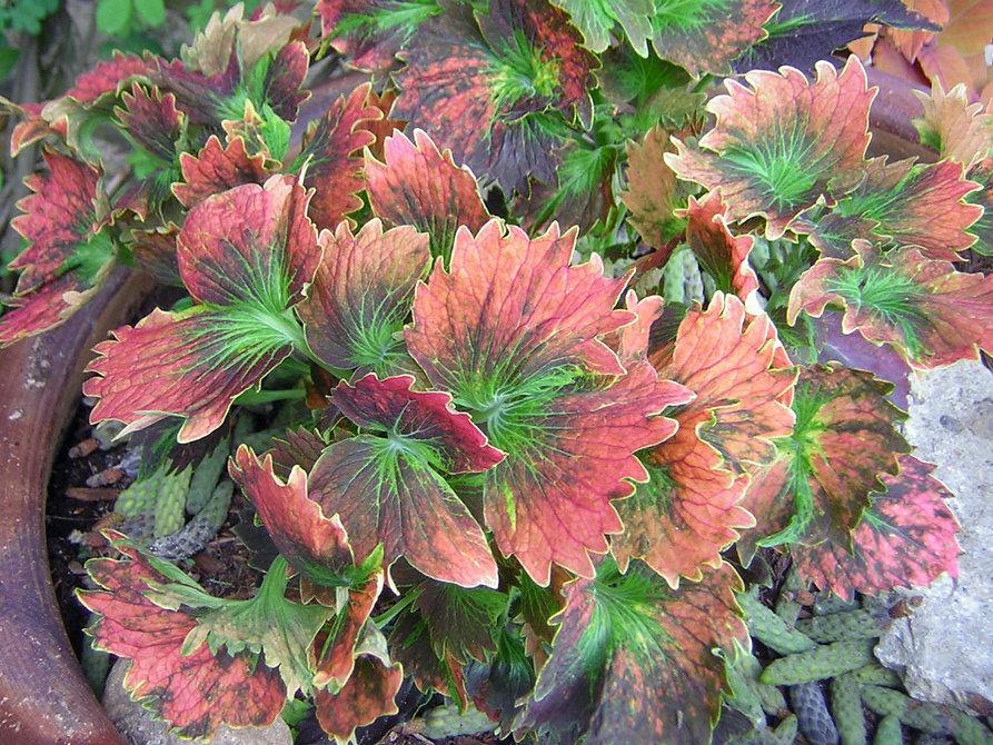 Garden-Club-2-1024x768.jpg
