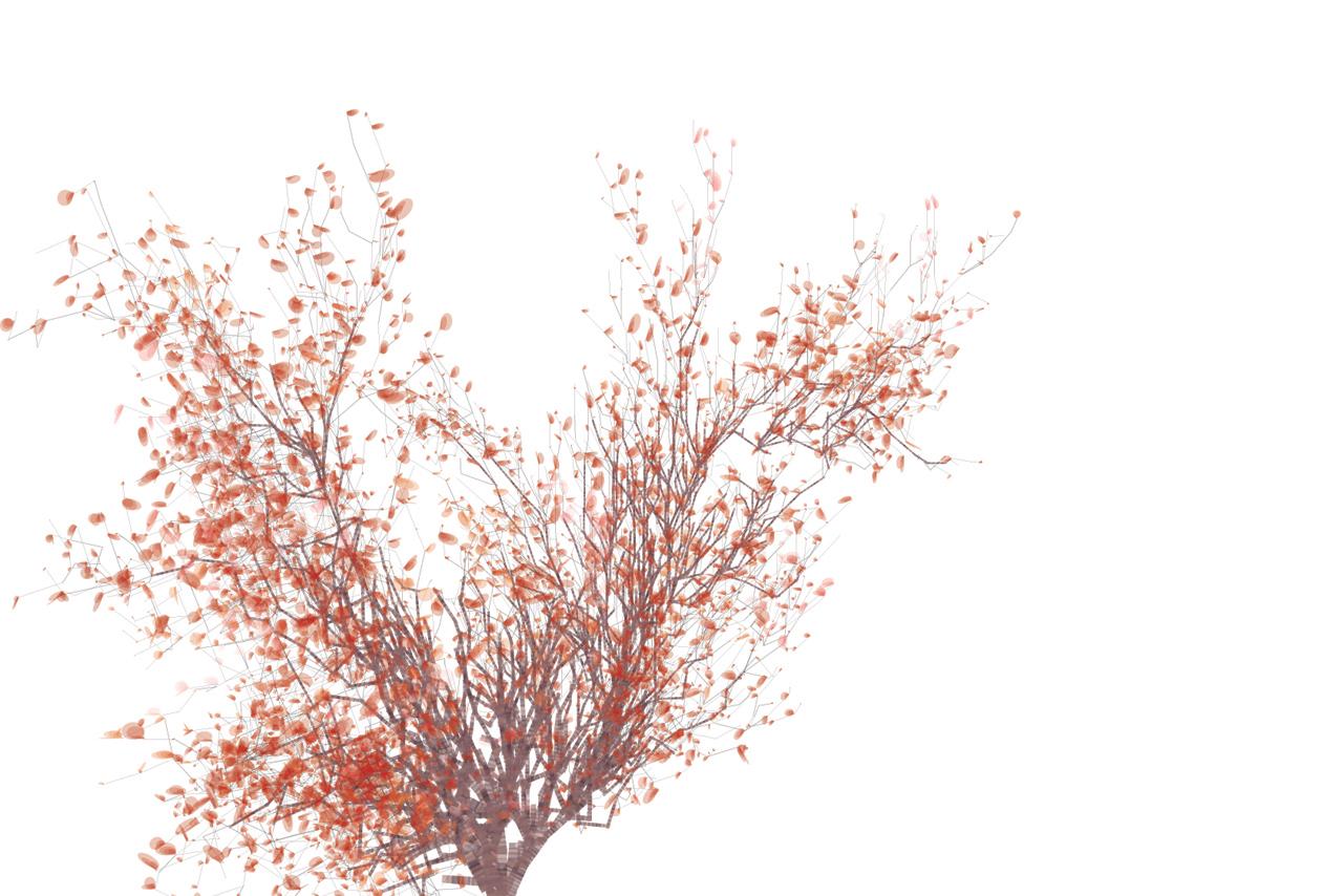 flame_tree_1280