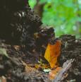 Forest floor soil