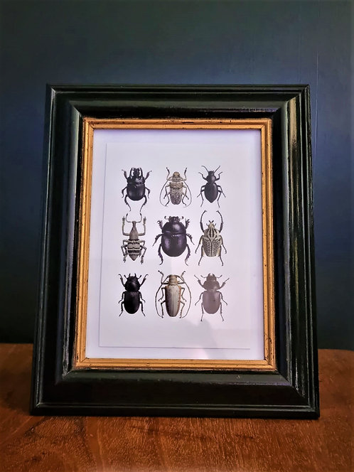 Framed beetle picture