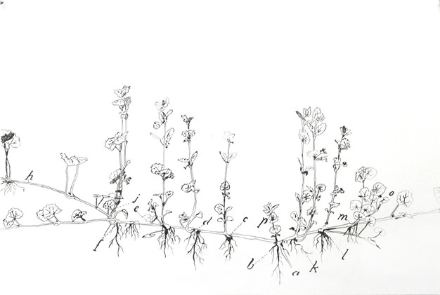 Botanic series 5