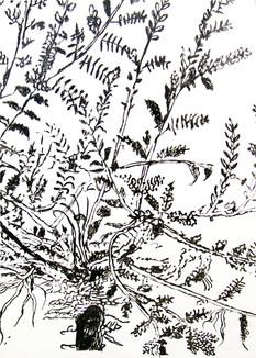 Botanic series 4