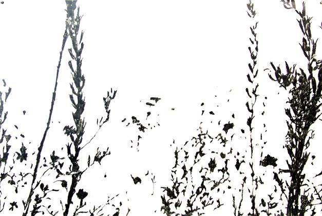 Botanical serie.jpg