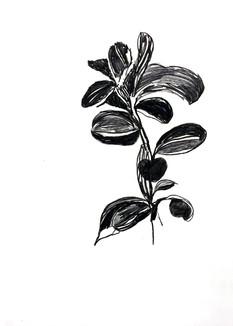Weeds, botanic series