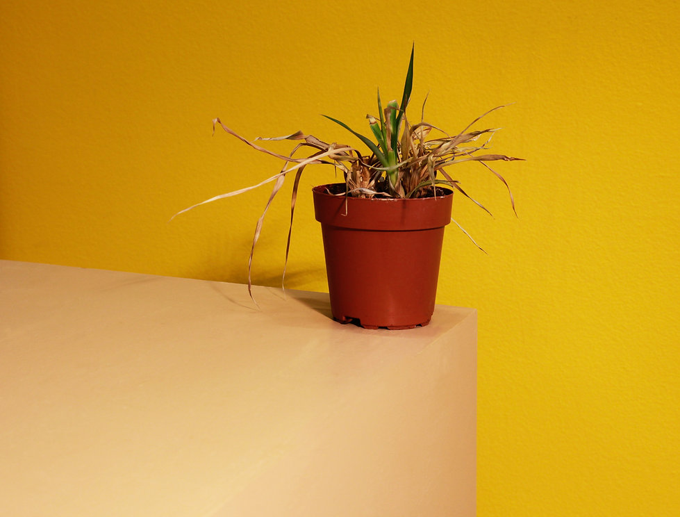 dood_plantje.jpg