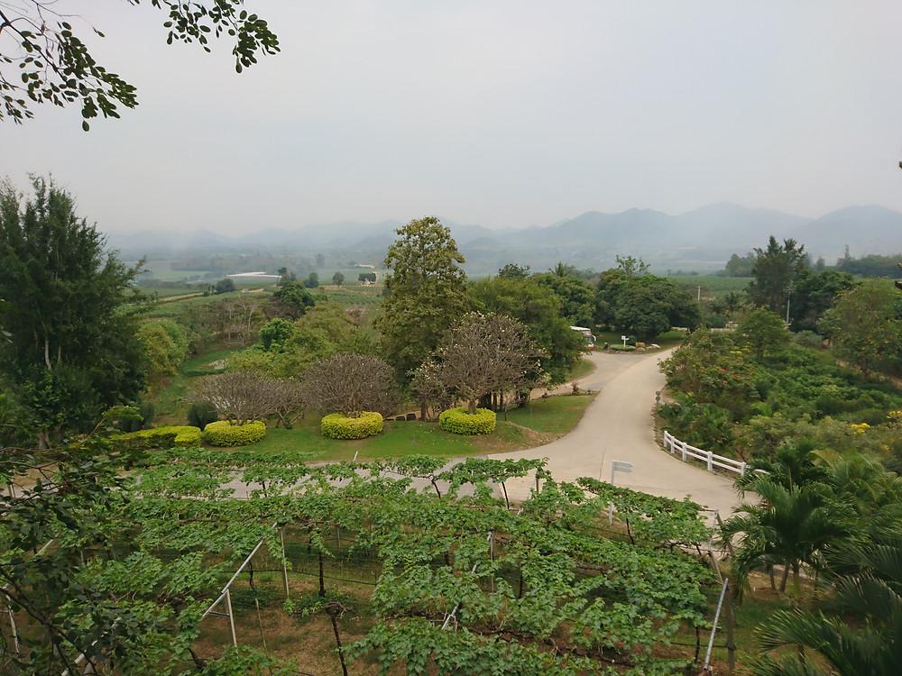 Grape farm zone