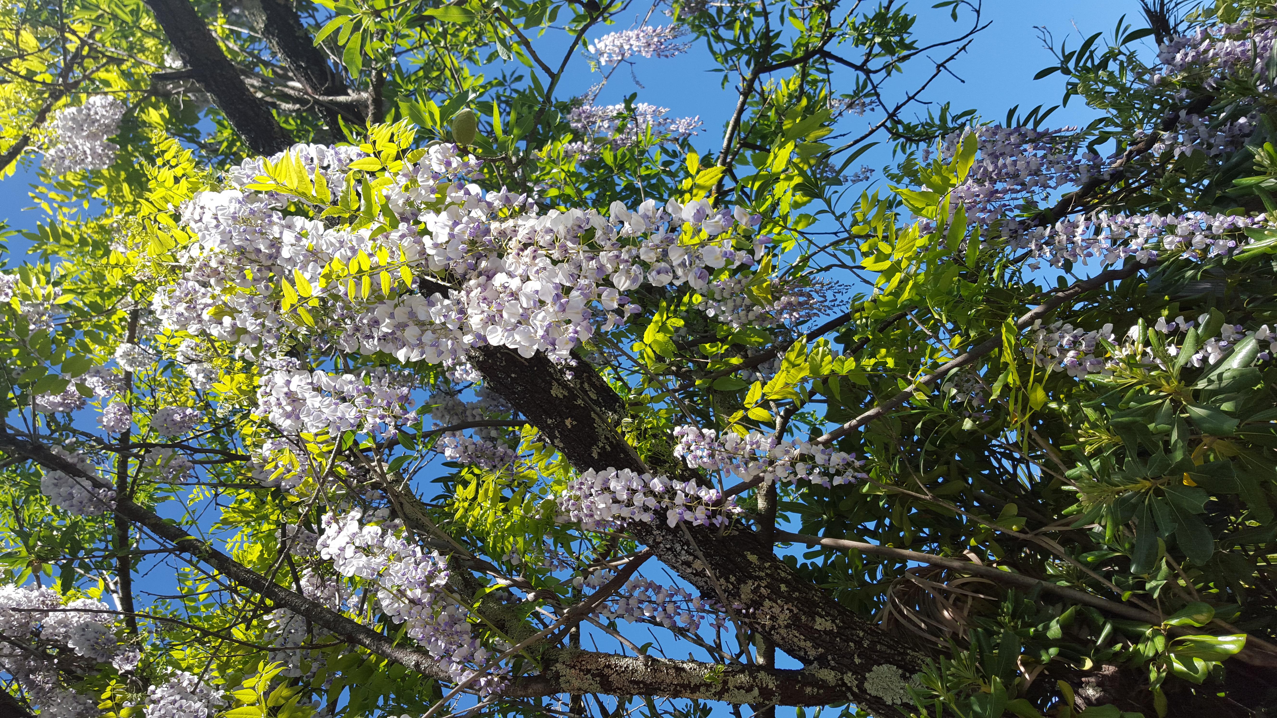 le printemps au Mas