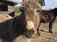 Janneke en Scott de ezels van de zorgboe