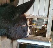 ezel op zorgboerderij kaatsheuvel