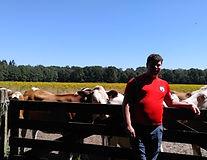 biologische koeien in weide zorgboerderi