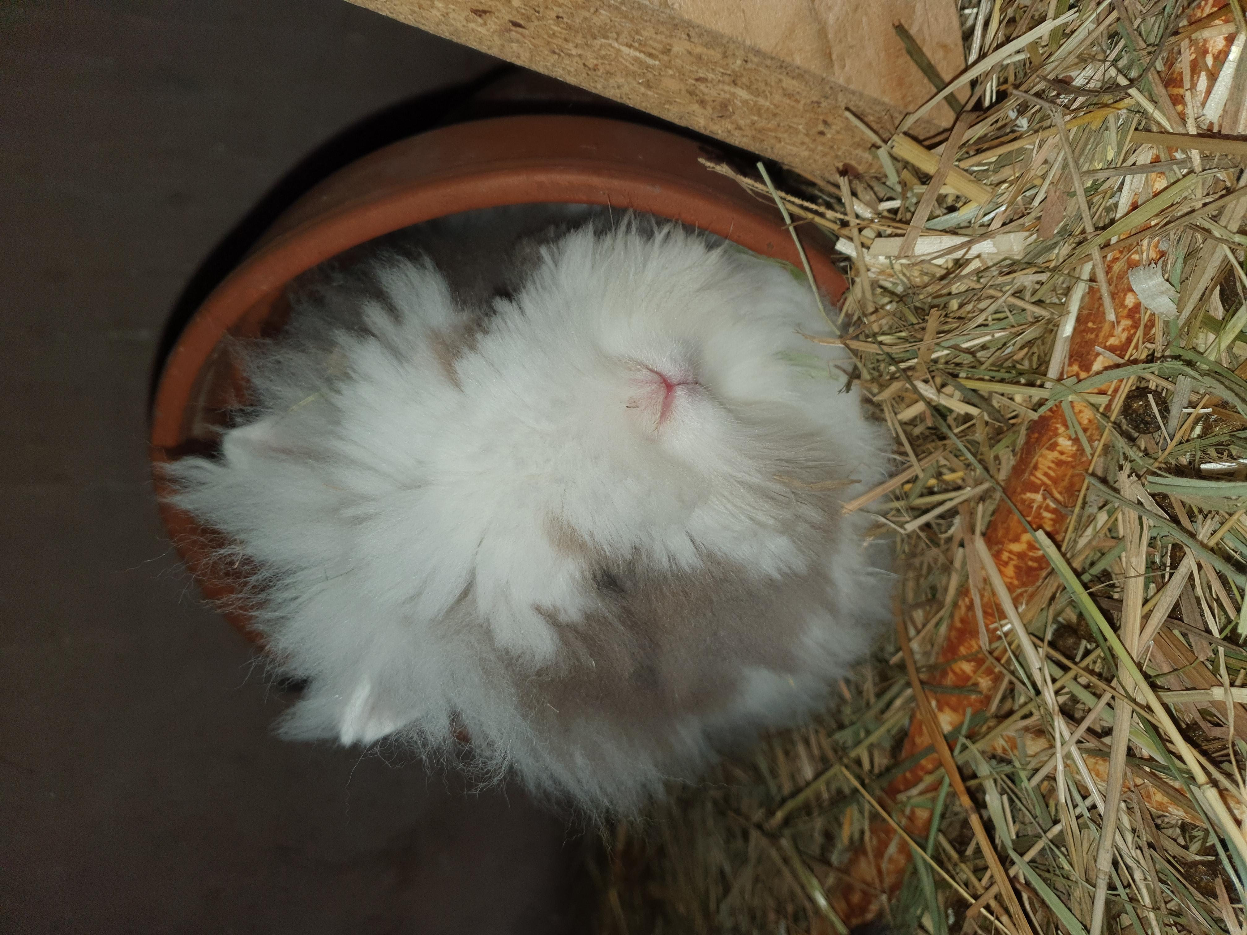 nieuw konijntje Fluffy