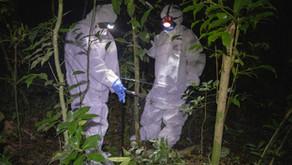 Unos 850.000 virus desconocidos podrían causar pandemias si no dejamos de explotar la naturaleza