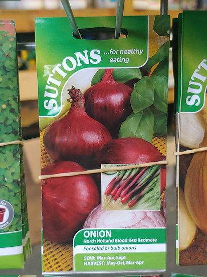 """Onion """"North Holland Blood Red Redmate"""""""
