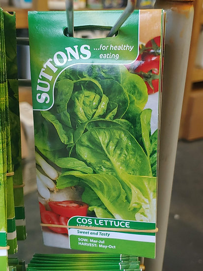"Cos Lettuce ""Little Gem"""
