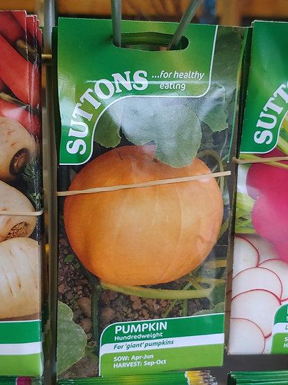 """Pumpkin """"Hundredweight"""""""
