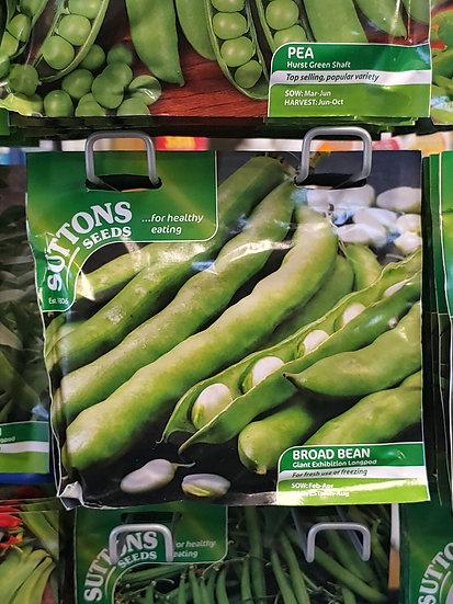 "Broad Bean ""Giant Exhibition Longpod"""
