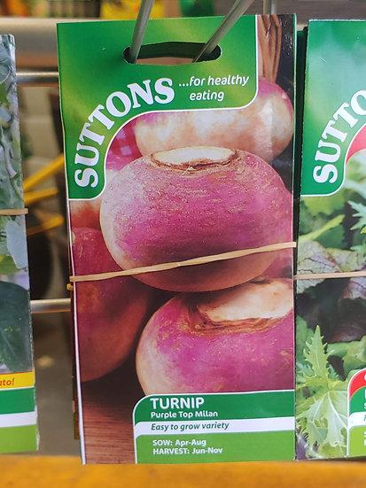 "Turnip ""Purple Top Milan"""