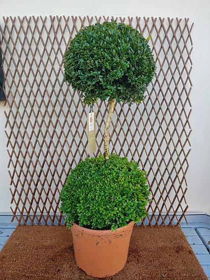 Buxus Ball two tier