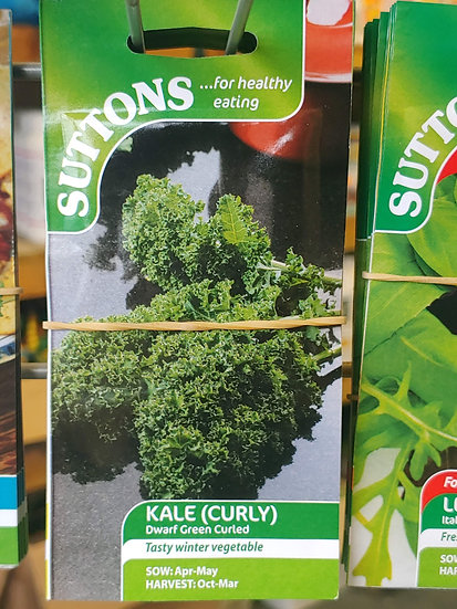 """Kale (Curly) """"(Borecole) Dwarf Green Curled"""""""