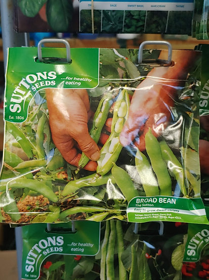 "Broad Bean ""The Sutton"""