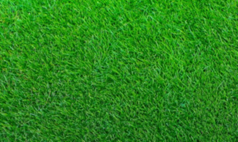 Red Dirt Turf Palisades Zoysia Grass