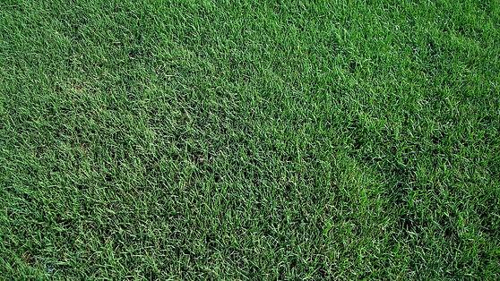 Red Dirt Turf Tifway419-Bermuda Grass