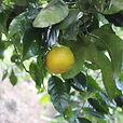 B_18-05_agrume-orange.JPG