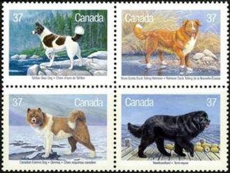 Canadian-Dogs---MiNo-1097-1100.jpg
