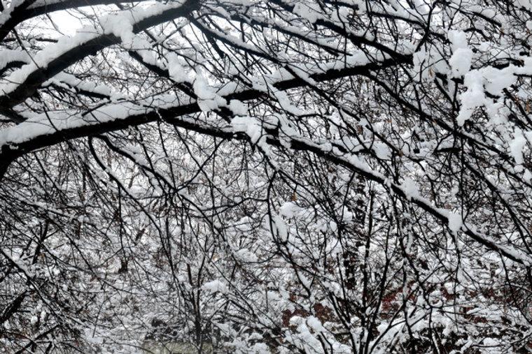 frondaison neige.jpg