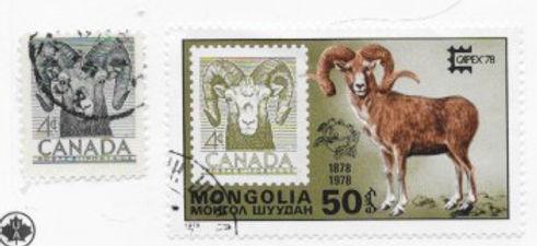 Mouflon mongolie.jpeg