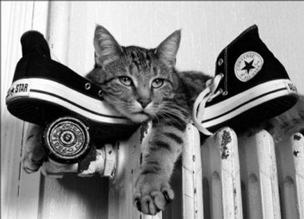 RC maison sans chat.jpg