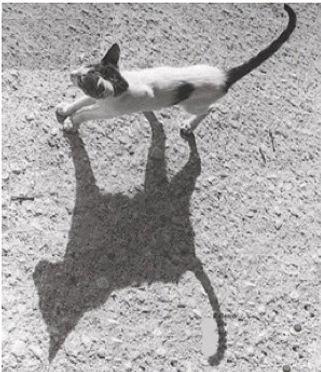 RC ombre.jpg