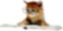 Goldmund icone.png