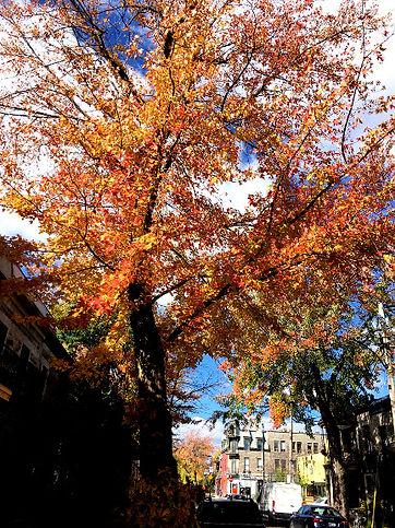 Arbre des feuilles.jpg
