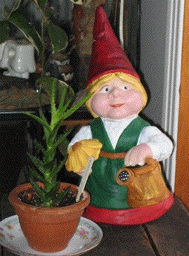 Ne arrosoir plante.jpg
