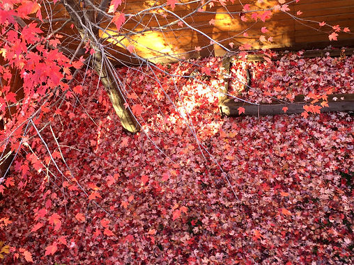 Tapis feuilles rouges.jpg
