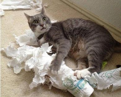 RC chats papier.jpg